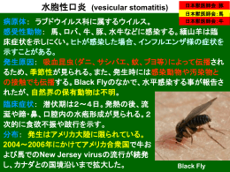 水胞性口炎