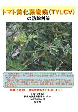 トマト黄化葉巻病(TYLCV)