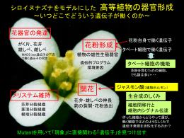 PowerPoint プレゼンテーション - シロイヌナズナをモデルにした 高等植物