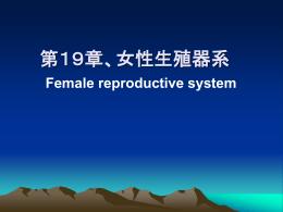 第19章、女性生殖器系