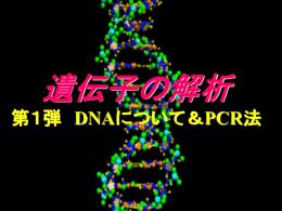 DNAシークエンス1