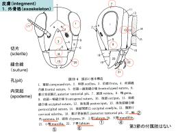 1.外骨格(exoskeleton)