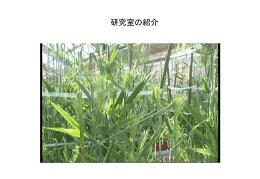 植物の「みずみずしさ」の分子機構解明とその応用のための基盤研究