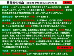 馬伝染性貧血