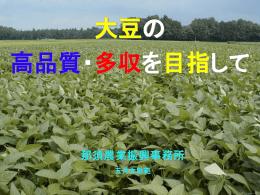 大豆講習(2.8MB)