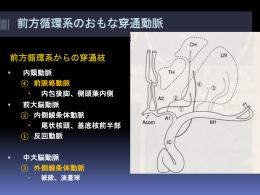 前大脳動脈皮質枝