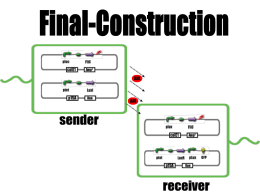 Final-Construction 実験