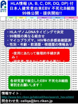 HLA情報 (A, B, C, DR, DQ, DP) 付 日本人健常者由来EBV 不死化B