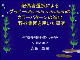 配偶者選択による グッピー(Poecilia reticulata)の カラーパターンの進化