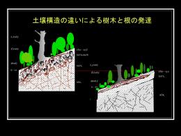 土壌構造の違いによる樹木と根の発達