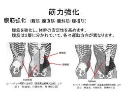腰部疾患の運動指導