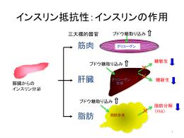 インスリン受容体とGLUT4が減少 (トランスロケーションの阻害)