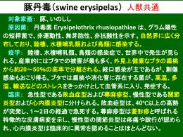 豚丹毒・トキソプラズマ