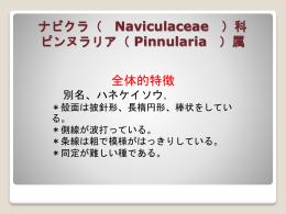 ナビクラ ( Naviculaceae ) 科 ネイディウム( Neidium )属