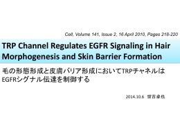 毛の形態形成と皮膚バリア形成においてTRPチャンネルはEGFR