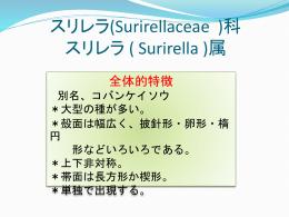 (Gomphocymbellaceae )科 ゴンフォネマ - SCHOLA-SHISHI