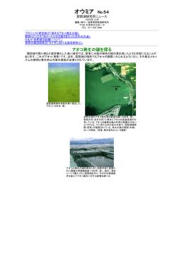 アオコ発生の謎を探る(PDF:266KB)