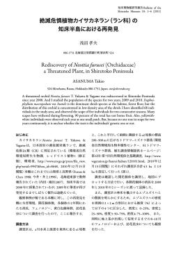 知床半島 再発見 Rediscovery of Neottia furusei (Orchidaceae)