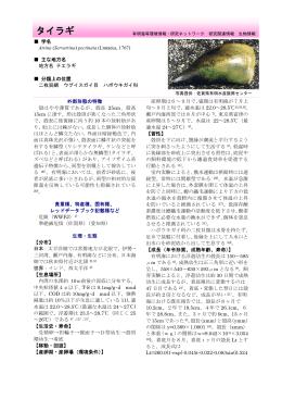 タイラギ - 有明海等環境情報・研究ネットワーク