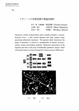 リポソームの形態変換の理論的解析