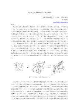 ゲル化する多糖類の分子集合構造 - SPring-8