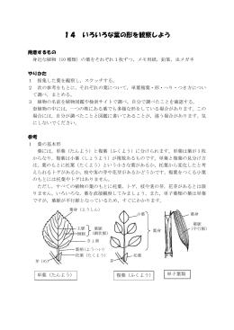 14 いろいろな葉の形を観察しよう