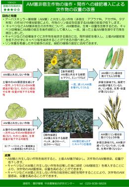 AM菌非宿主作物の後作・間作への緑肥導入による