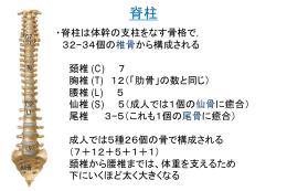 骨格・筋系2