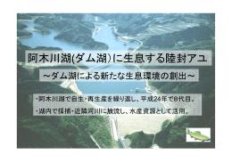 阿木川湖(ダム湖)に生息する陸封アユ