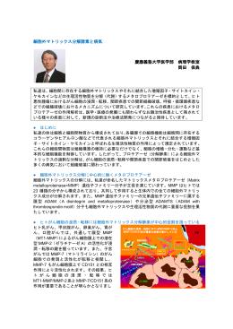 細胞外マトリックス分解酵素と病気 慶應義塾大学医学部