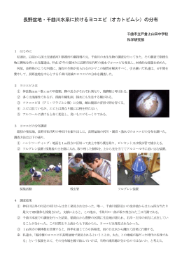 長野盆地・千曲川水系に於けるヨコエビ(オカトビムシ)の分布