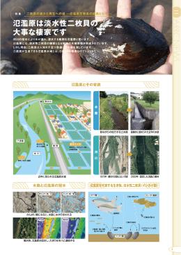 氾濫原は淡水性二枚貝の 大事な棲家です