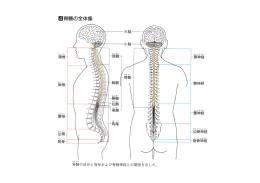 脊髄の全体像