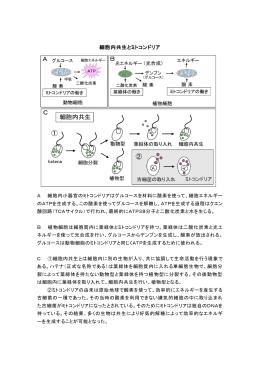 細胞内共生とミトコンドリア