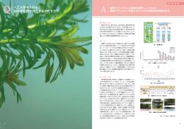 人工水草を入れると 池の透明度が向上するのですか?