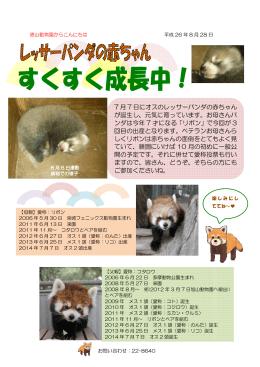 レッサーパンダの赤ちゃん すくすく成長中!