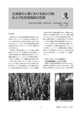 北海道の小麦における赤かび病 および紅色雪腐病の防除