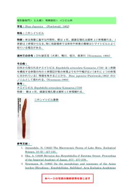 Dina Japonica(PDF:121KB)