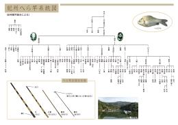 紀州へら竿系統図