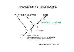 脊椎動物の進化における顎の獲得