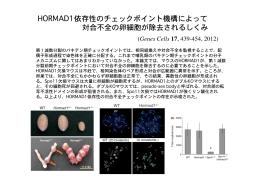 HORMAD1依存性のチェックポイント機構によって 対合不全の卵細胞が