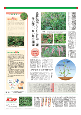農耕伝来 と と も に 日 本上陸 農 耕 伝 来 と と も に 日