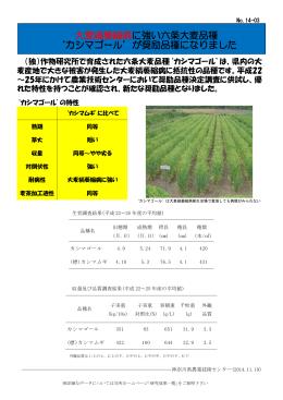 大麦縞萎縮病に強い六条大麦品種 `カシマゴール`が奨励品種になりました