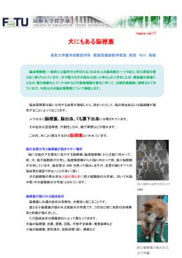 犬にもある脳梗塞 - 鳥取大学農学部附属動物医療センター