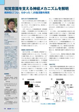 知覚意識を支える神経メカニズムを解明 [ PDF:912KB ]