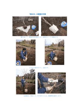 pdf(春めきの根巻き作業