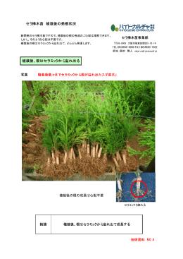 4.根が溢れる(セラミック内での根の成長)