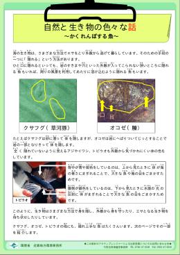 2015年8月号<かくれんぼする魚