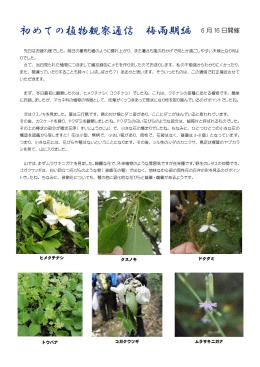 初めての植物観察通信 梅雨期編 6 月 16 日開催
