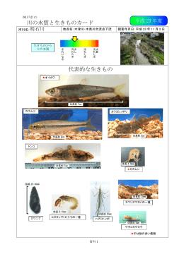 (平成23年度)西神河川の生きものカード(PDF形式:6014KB)